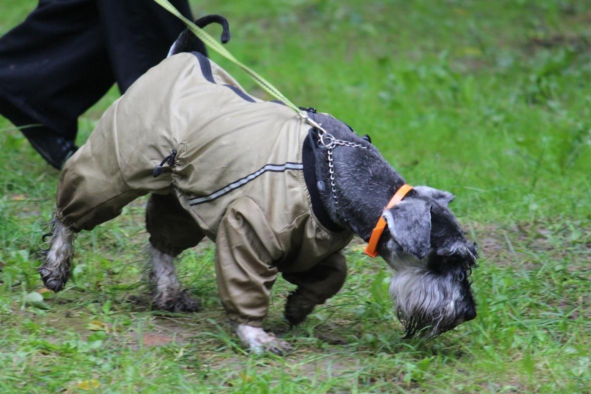 В Ужгороді у Боздоському парку пройшла масштабна виставка собак: фото, фото-10