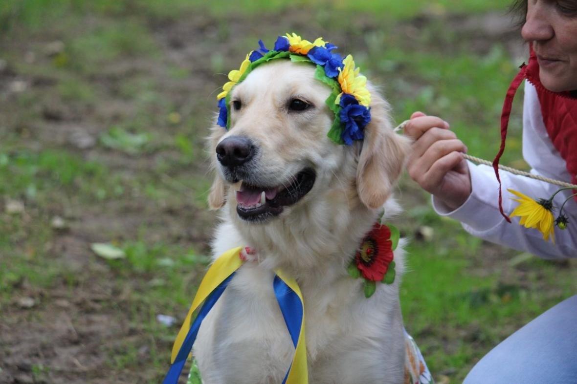В Ужгороді у Боздоському парку пройшла масштабна виставка собак: фото, фото-11