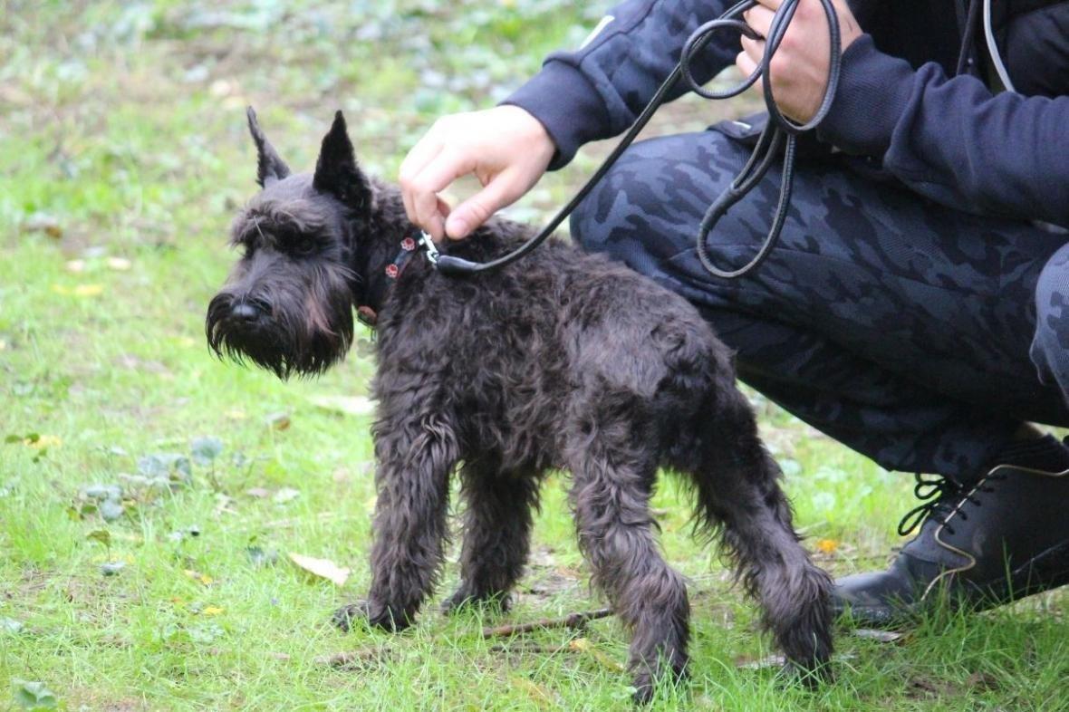 В Ужгороді у Боздоському парку пройшла масштабна виставка собак: фото, фото-12