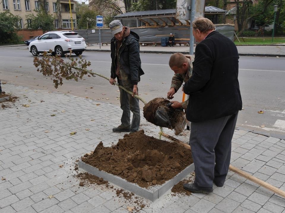 Клени та ясени: сьогодні в Ужгороді посадили 37 нових дерев (ФОТО), фото-3