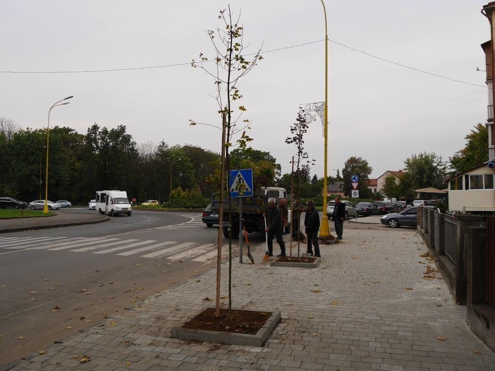 Клени та ясени: сьогодні в Ужгороді посадили 37 нових дерев (ФОТО), фото-4