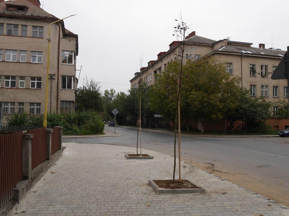 Клени та ясени: сьогодні в Ужгороді посадили 37 нових дерев (ФОТО), фото-5