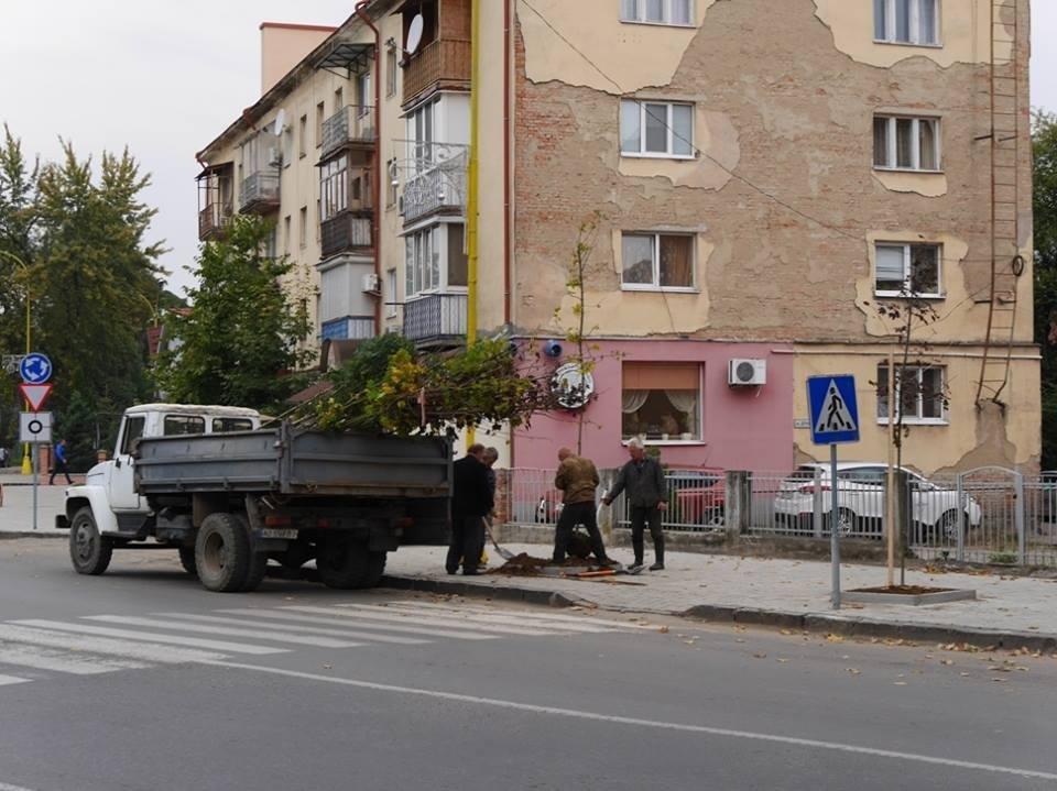 Клени та ясени: сьогодні в Ужгороді посадили 37 нових дерев (ФОТО), фото-1