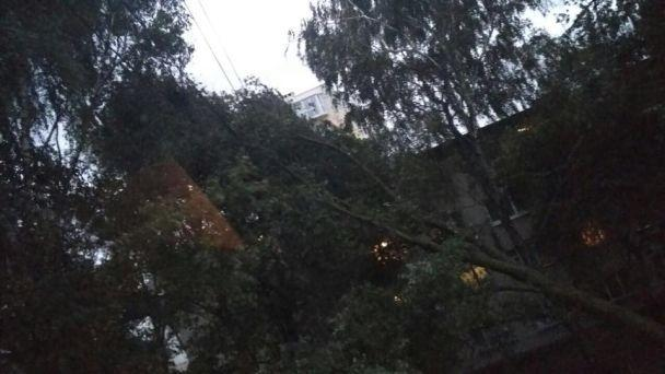 Вночі на Заході України пройшов потужний буревій: 18 населених пунктів Закарпаття - без світла (ФОТО), фото-7