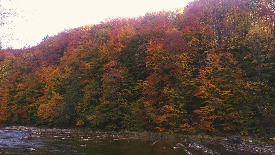 Осіннє різнобарв'я: у соцмережі опублікували фото лісу на Закарпатті, через який протікає річка, фото-2