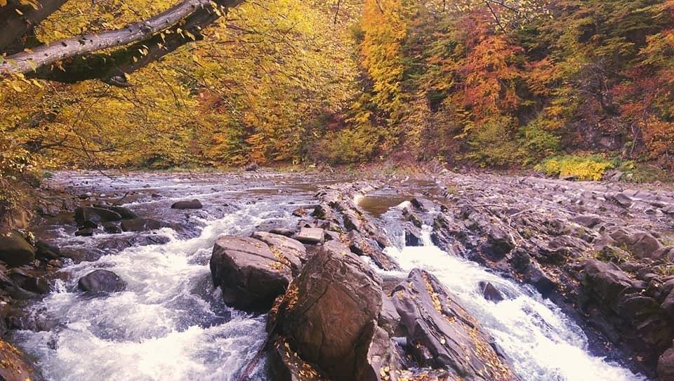 Осіннє різнобарв'я: у соцмережі опублікували фото лісу на Закарпатті, через який протікає річка, фото-4
