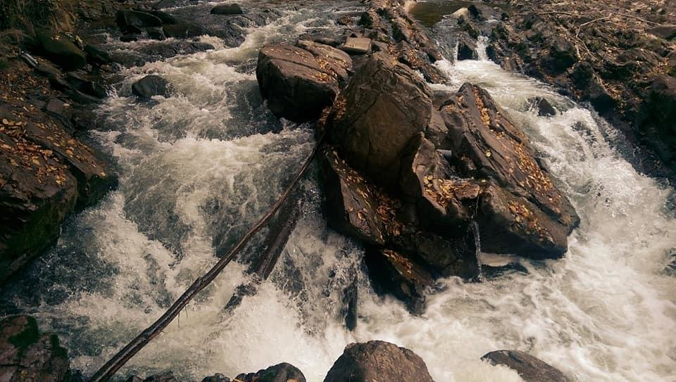 Осіннє різнобарв'я: у соцмережі опублікували фото лісу на Закарпатті, через який протікає річка, фото-3