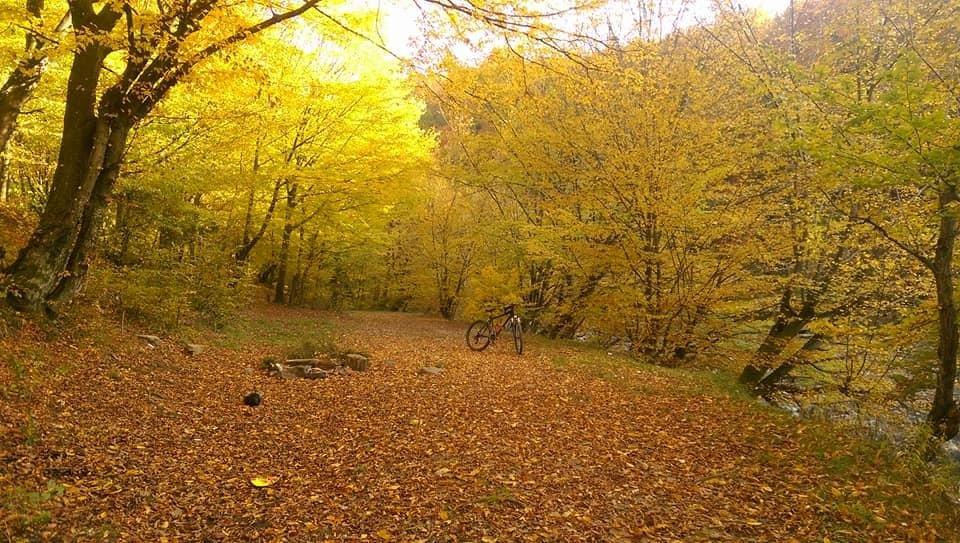 Осіннє різнобарв'я: у соцмережі опублікували фото лісу на Закарпатті, через який протікає річка, фото-8