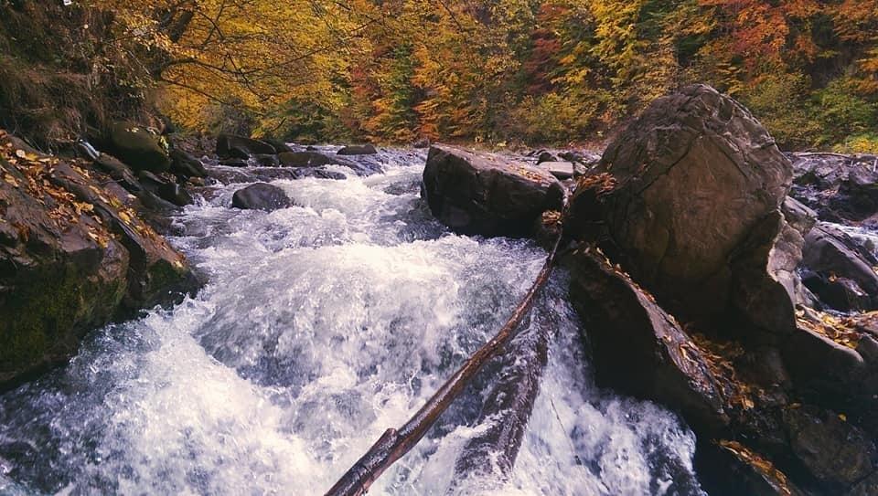 Осіннє різнобарв'я: у соцмережі опублікували фото лісу на Закарпатті, через який протікає річка, фото-5