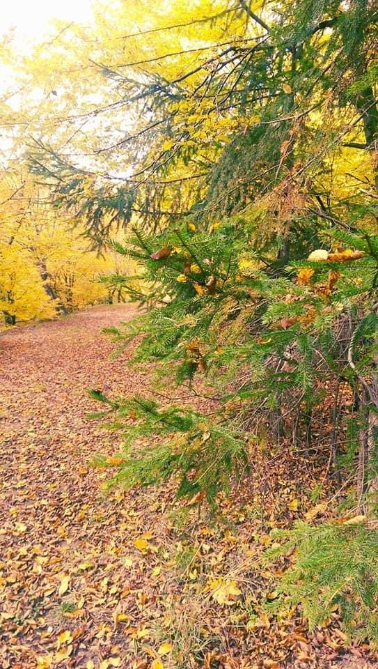 Осіннє різнобарв'я: у соцмережі опублікували фото лісу на Закарпатті, через який протікає річка, фото-9