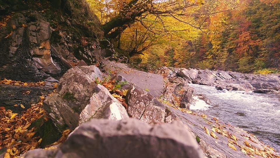 Осіннє різнобарв'я: у соцмережі опублікували фото лісу на Закарпатті, через який протікає річка, фото-6