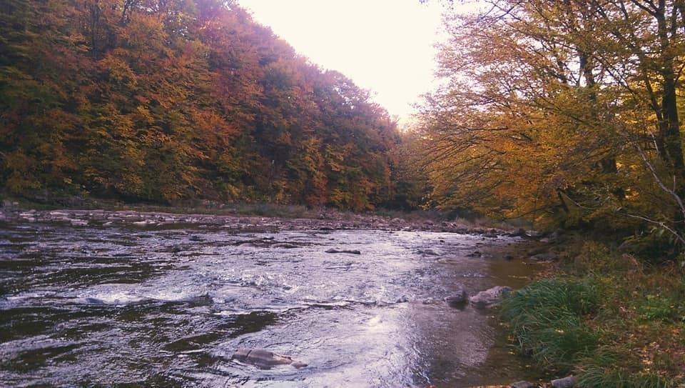 Осіннє різнобарв'я: у соцмережі опублікували фото лісу на Закарпатті, через який протікає річка, фото-7
