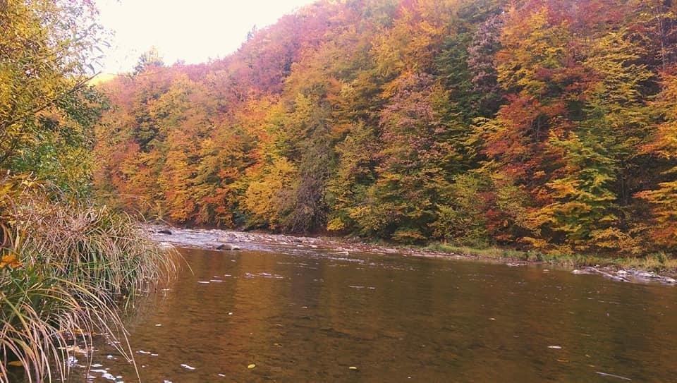 Осіннє різнобарв'я: у соцмережі опублікували фото лісу на Закарпатті, через який протікає річка, фото-1