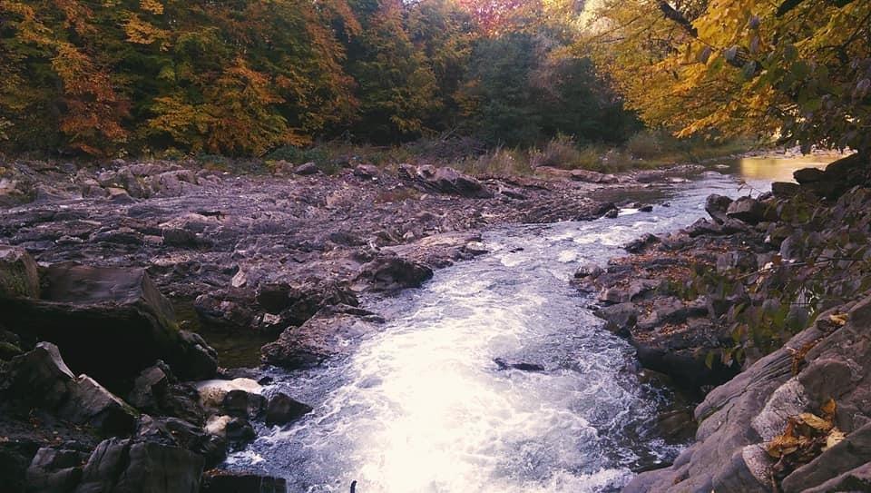 Осіннє різнобарв'я: у соцмережі опублікували фото лісу на Закарпатті, через який протікає річка, фото-10