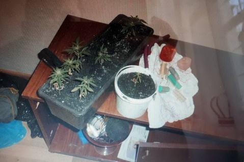 """Поліція """"накрила"""" домашню нарколабораторію 28-літнього мешканця Сваляви, який висушував марихуану: фото, фото-2"""