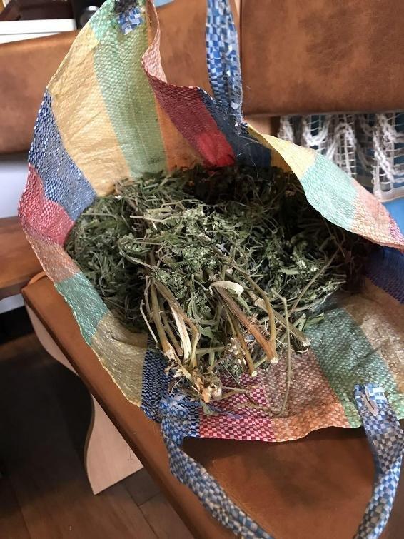 """Обшуки у """"наркобаронів"""" Чопа: вилучено 12 кілограмів марихуани (ФОТО), фото-4"""