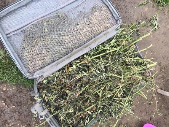 """Обшуки у """"наркобаронів"""" Чопа: вилучено 12 кілограмів марихуани (ФОТО), фото-2"""