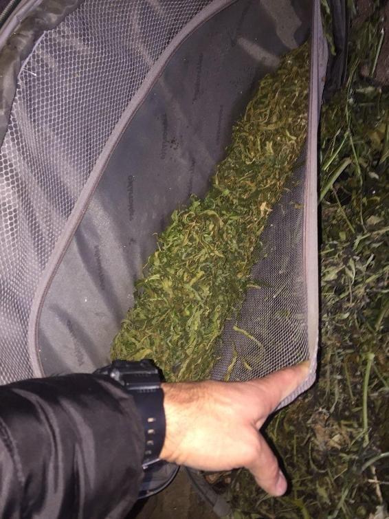 """Обшуки у """"наркобаронів"""" Чопа: вилучено 12 кілограмів марихуани (ФОТО), фото-6"""