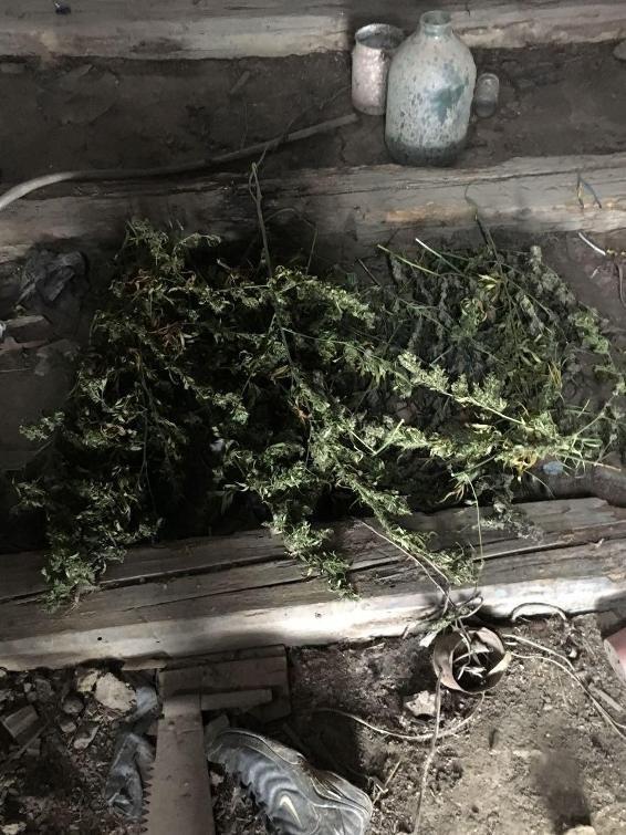 """Обшуки у """"наркобаронів"""" Чопа: вилучено 12 кілограмів марихуани (ФОТО), фото-5"""