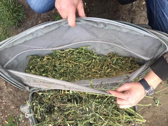 """Обшуки у """"наркобаронів"""" Чопа: вилучено 12 кілограмів марихуани (ФОТО), фото-7"""