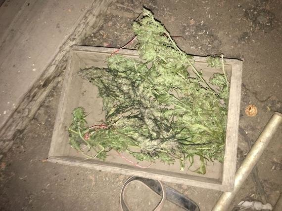 """Обшуки у """"наркобаронів"""" Чопа: вилучено 12 кілограмів марихуани (ФОТО), фото-1"""