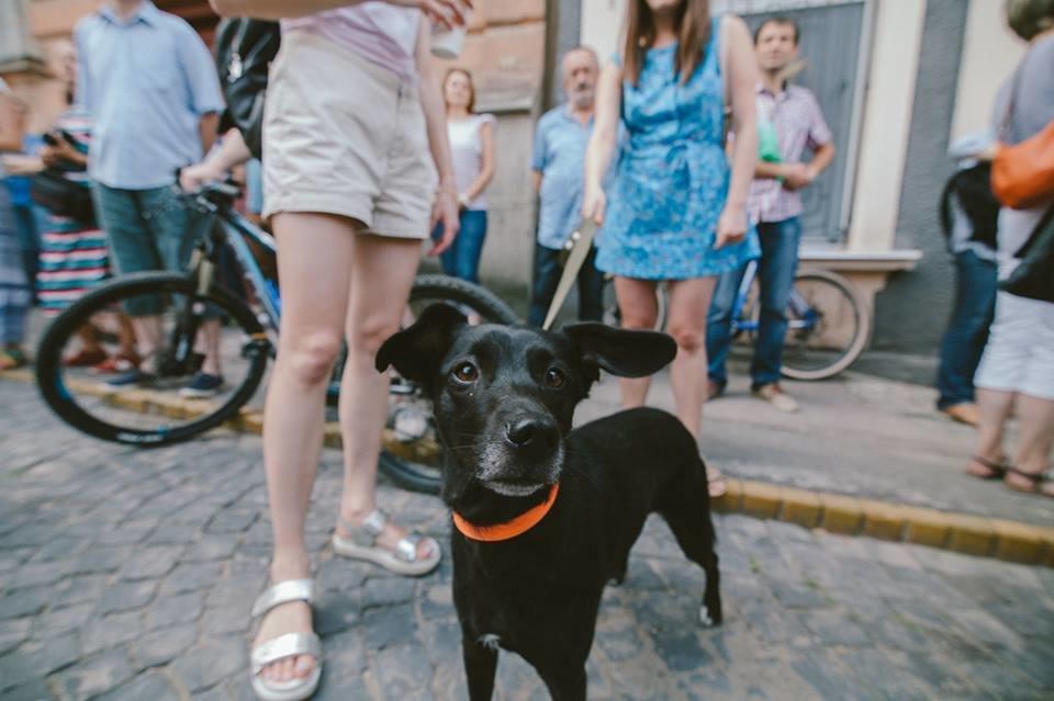 У пошуках Берти: в Ужгороді родина звернулась із заявою до поліції про зникнення собаки (ФОТО), фото-2