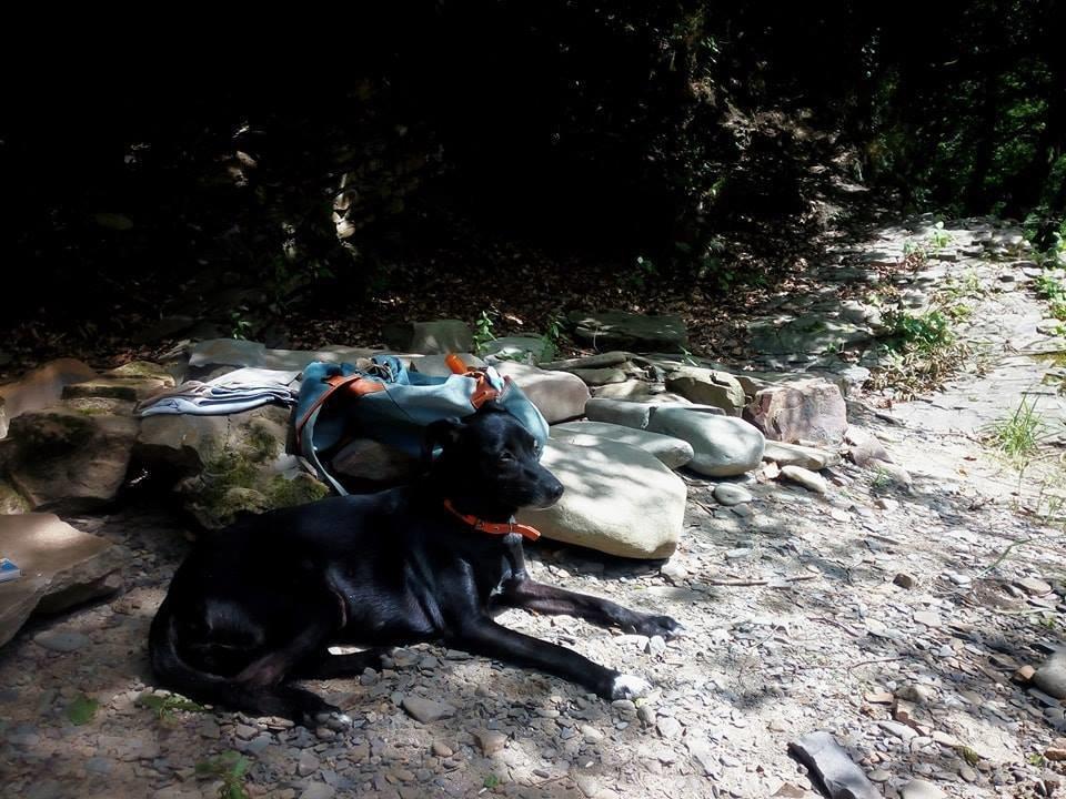 У пошуках Берти: в Ужгороді родина звернулась із заявою до поліції про зникнення собаки (ФОТО), фото-3