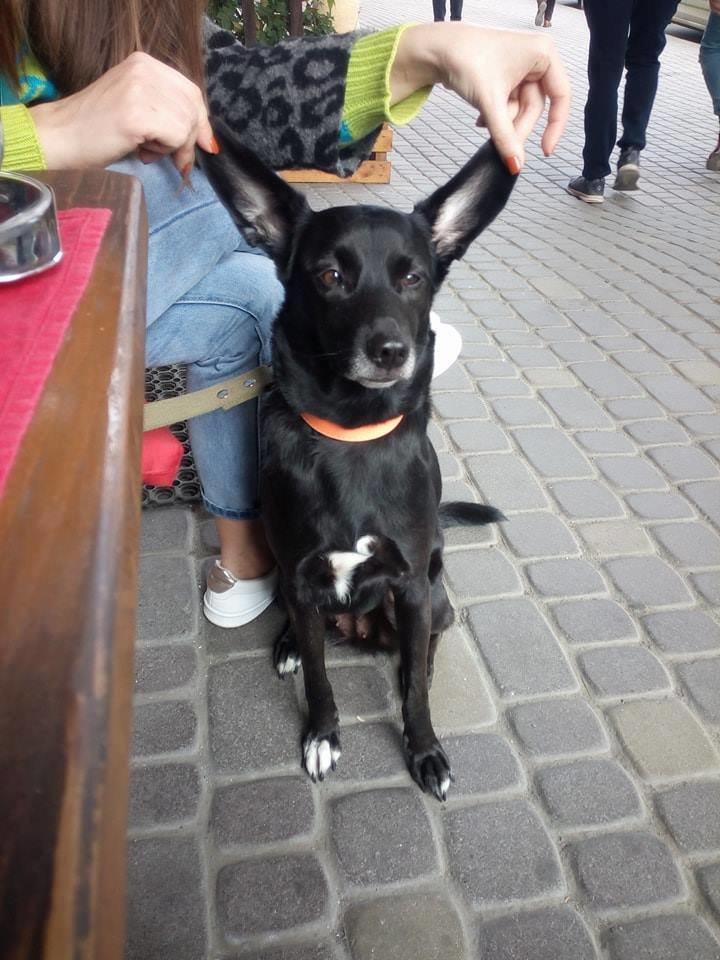У пошуках Берти: в Ужгороді родина звернулась із заявою до поліції про зникнення собаки (ФОТО), фото-4