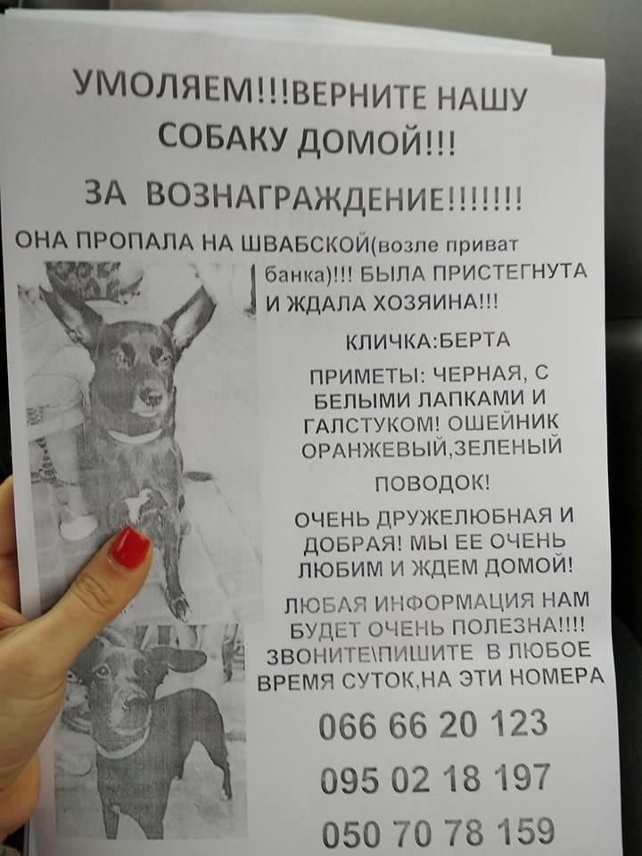 У пошуках Берти: в Ужгороді родина звернулась із заявою до поліції про зникнення собаки (ФОТО), фото-1