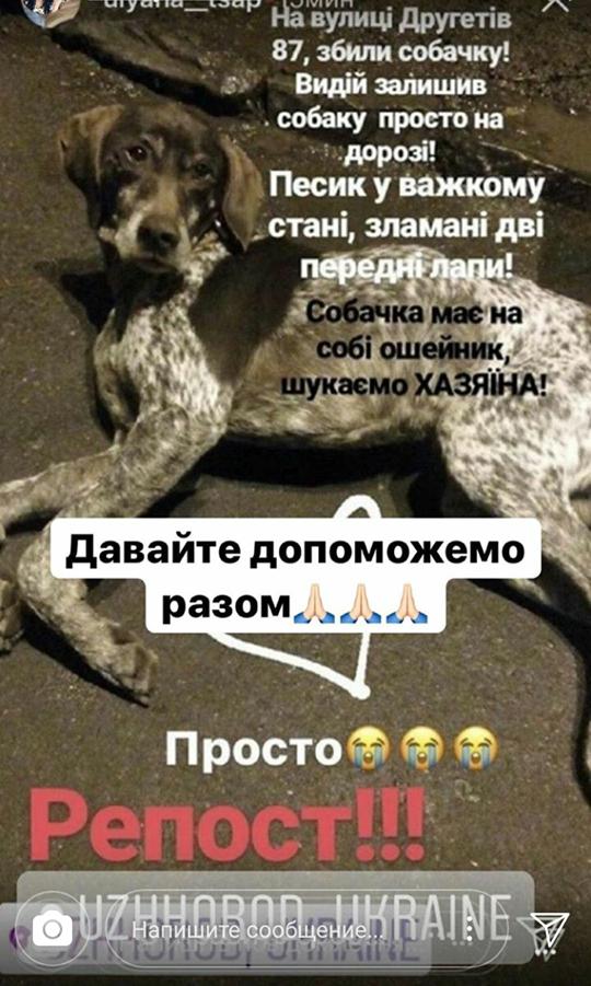 В Ужгороді на вулиці Другетів водій збив собаку і втік: фото, фото-1