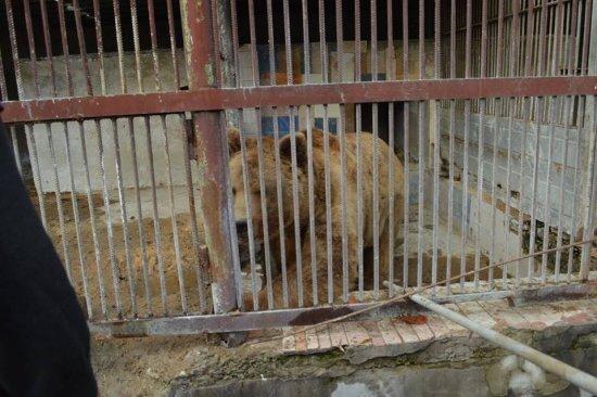 15 років у клітці: на Закарпаття привезли 3-х ведмедів, які більше 10-ліття не бачили лісу (ФОТО, ВІДЕО), фото-2