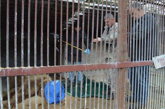 15 років у клітці: на Закарпаття привезли 3-х ведмедів, які більше 10-ліття не бачили лісу (ФОТО, ВІДЕО), фото-1