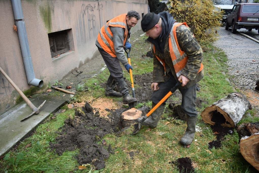 Як в Ужгороді сакури рубали: фото, фото-4