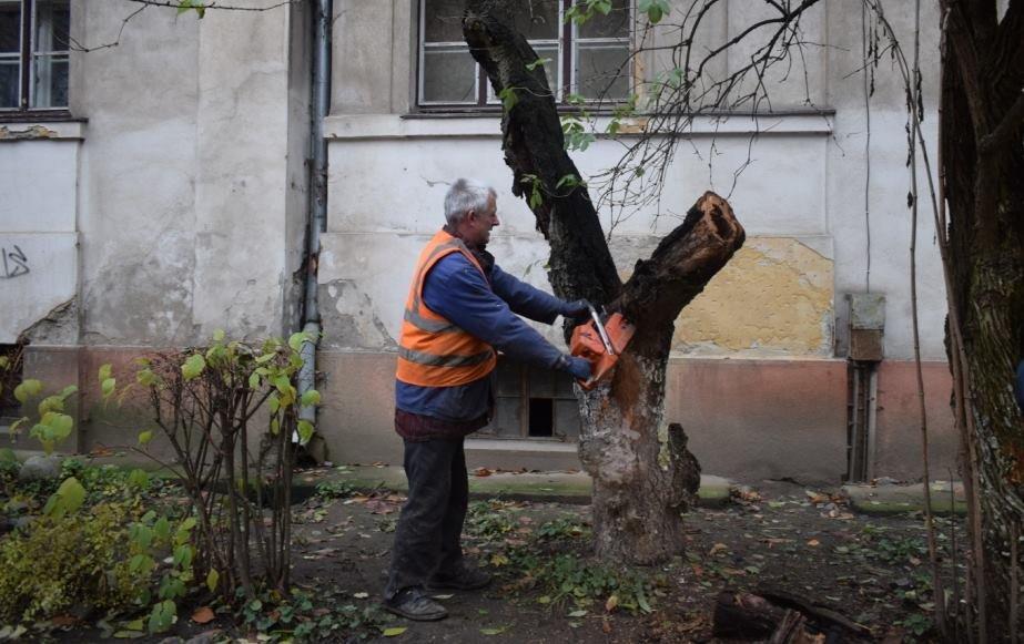 Як в Ужгороді сакури рубали: фото, фото-2