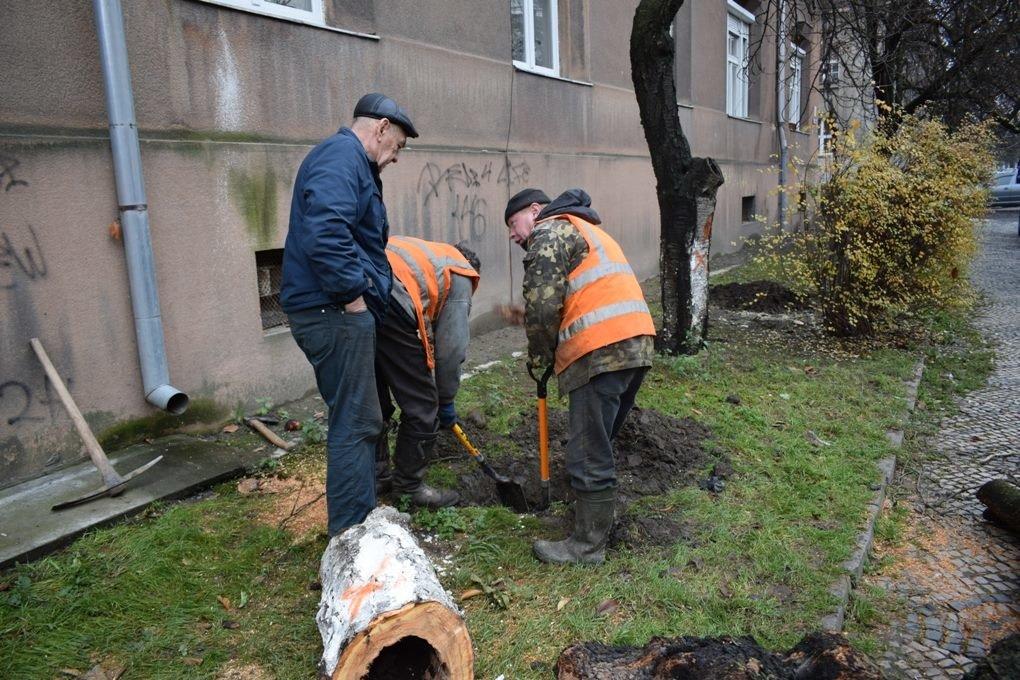 Як в Ужгороді сакури рубали: фото, фото-8