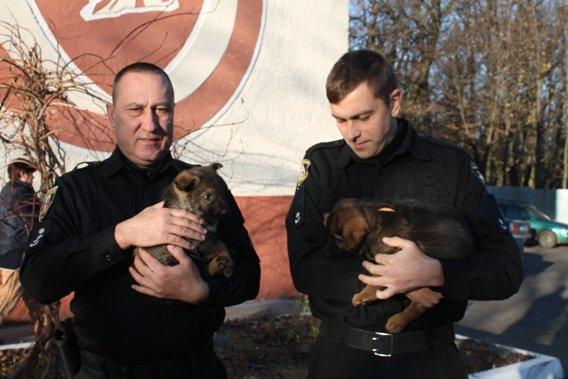 """Ямбо і Алмаз: кінологічний центр закарпатської поліції  отримав в подарунок німецьких """"напарників"""" (ФОТО, ВІДЕО), фото-1"""