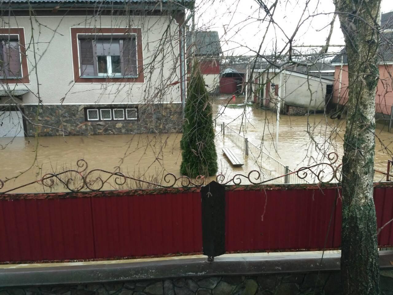 Закарпаття затопило: 490 гектарів сільгоспугідь, житлові помешкання та дороги під водою: фото, фото-4