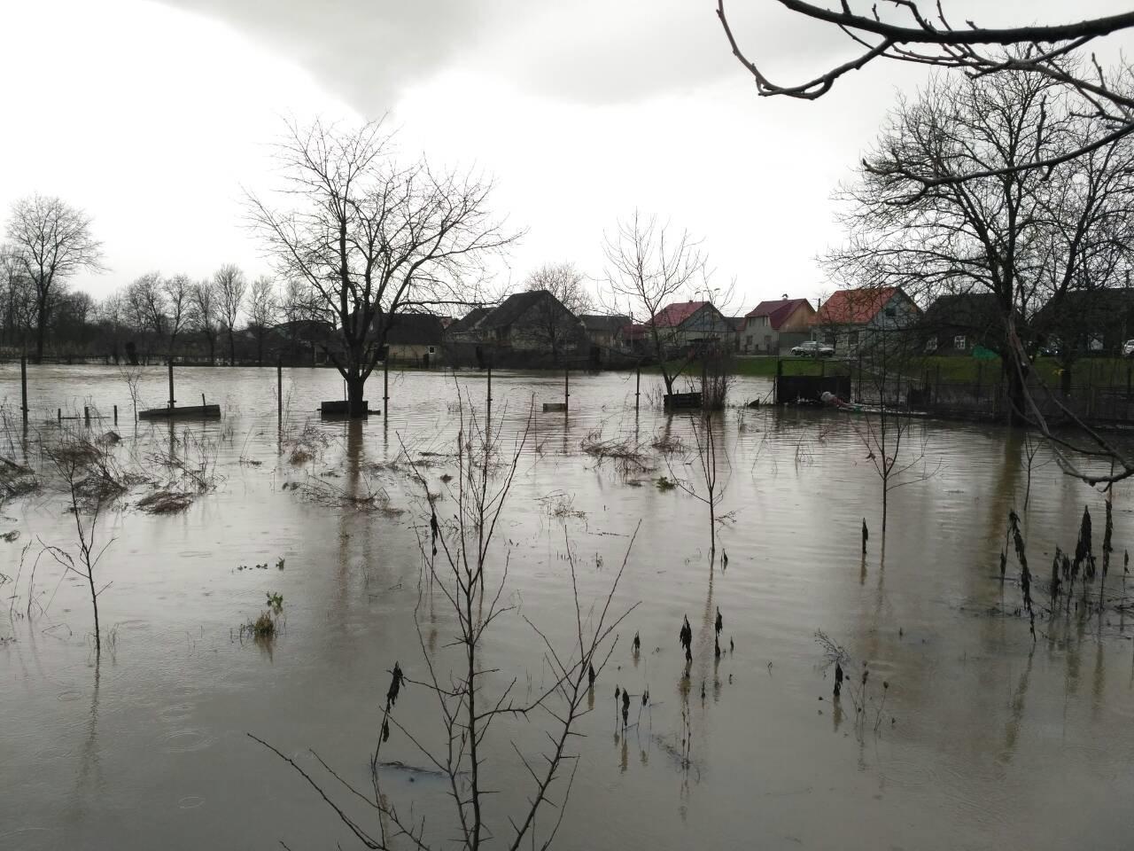 Закарпаття затопило: 490 гектарів сільгоспугідь, житлові помешкання та дороги під водою: фото, фото-7