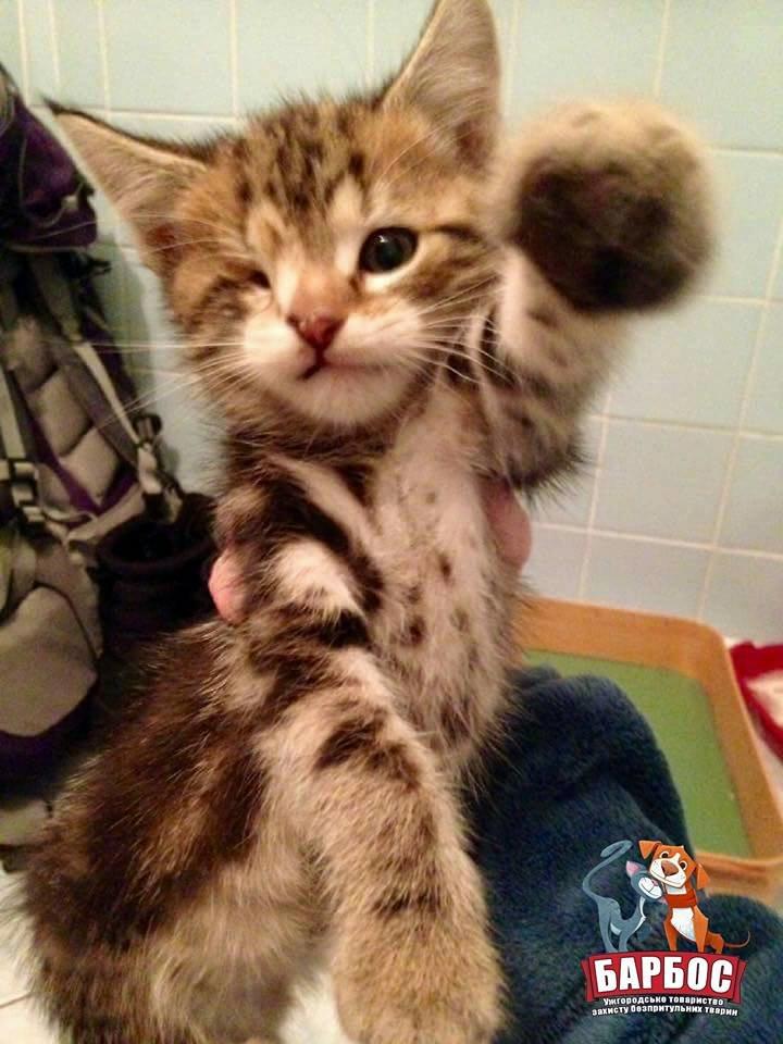 Його викинули на смітник: історія одноокого кота Тьоми, якого прихистила турботлива родина (ФОТО), фото-2