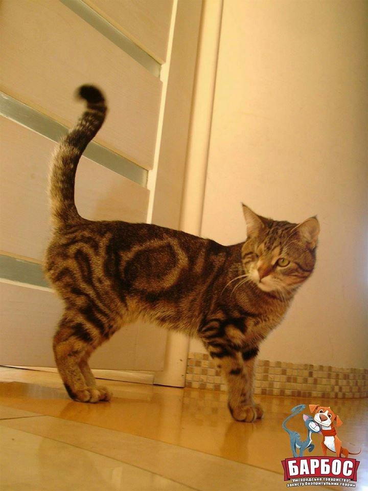 Його викинули на смітник: історія одноокого кота Тьоми, якого прихистила турботлива родина (ФОТО), фото-3