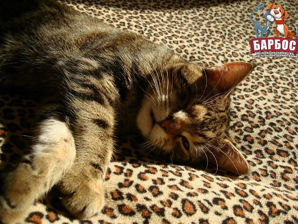 Його викинули на смітник: історія одноокого кота Тьоми, якого прихистила турботлива родина (ФОТО), фото-4