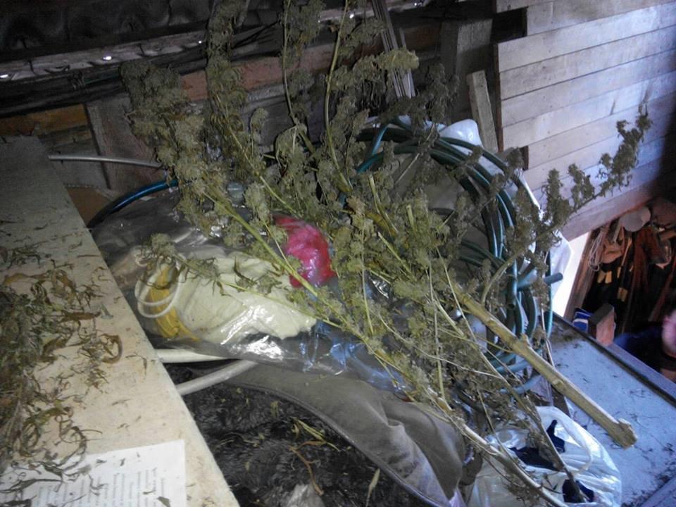 """В Іршаві у помешканні 48-річного чоловіка знайшли півкілограма марихуани та 196 """"нарковмісних"""" кущів: фото, фото-4"""