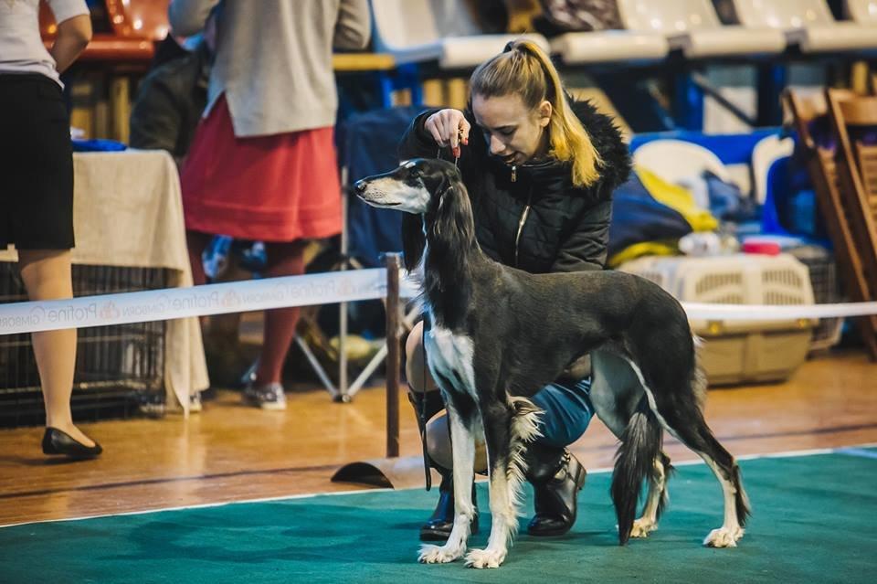 В Ужгороді проходить виставка собак (ФОТОРЕПОРТАЖ), фото-6