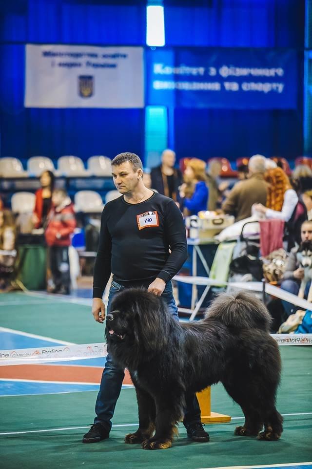 В Ужгороді проходить виставка собак (ФОТОРЕПОРТАЖ), фото-7