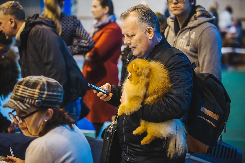 В Ужгороді проходить виставка собак (ФОТОРЕПОРТАЖ), фото-5