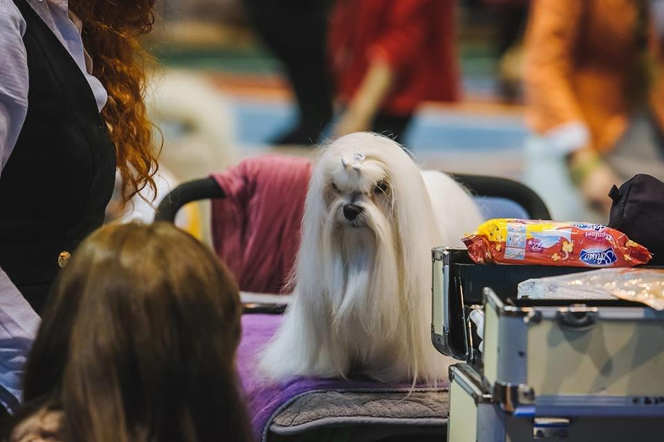 В Ужгороді проходить виставка собак (ФОТОРЕПОРТАЖ), фото-10