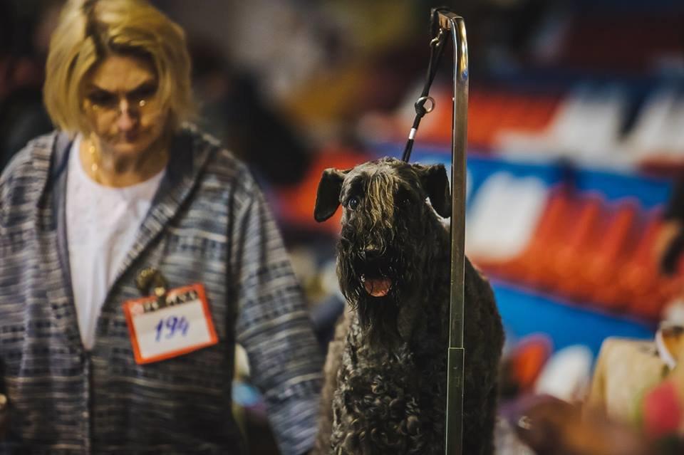 В Ужгороді проходить виставка собак (ФОТОРЕПОРТАЖ), фото-1