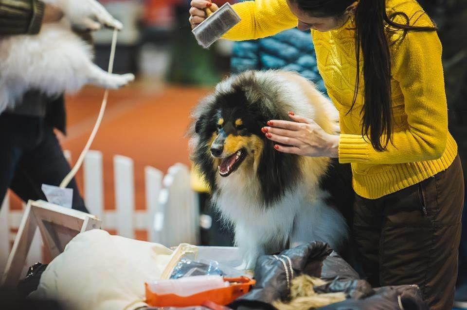 В Ужгороді проходить виставка собак (ФОТОРЕПОРТАЖ), фото-12