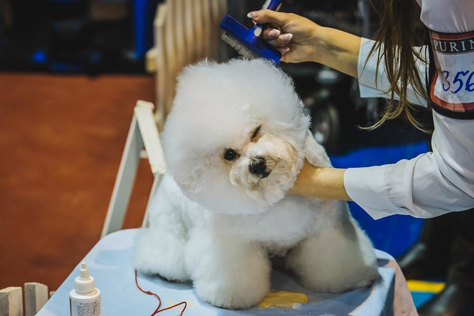 В Ужгороді проходить виставка собак (ФОТОРЕПОРТАЖ), фото-2