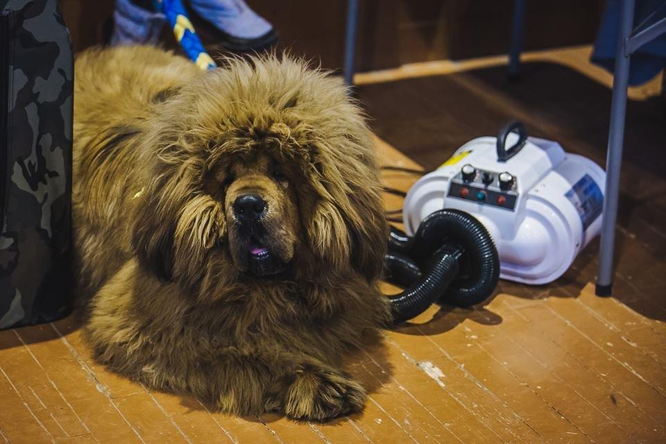 В Ужгороді проходить виставка собак (ФОТОРЕПОРТАЖ), фото-15